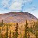 Golden boreal forest taiga autumn Yukon Territory Canada - PhotoDune Item for Sale