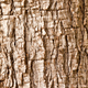 Free Download Olive tree Olea europaea bark nature background Nulled
