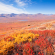 Free Download Autumn colored mountain tundra Yukon Territory Canada Nulled