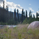 Free Download Boreal forest taiga wilderness camping Nulled