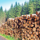 Stacked tree trunks forestry harvest - PhotoDune Item for Sale