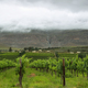 Free Download Vineyards in the way to Montagu Nulled