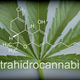 Free Download Marijuana leaf chemical composition of tetrahydrocannabinol, conceptual image Nulled
