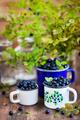Fresh ripe bluberries (bilberries) in enamel mugs - PhotoDune Item for Sale