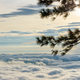 Free Download Silhouette the pine tree at sunrise Nulled