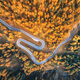 Free Download Aerial view of the winding road in autumn forest at sunset Nulled