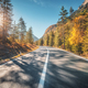Free Download Road in autumn forest at sunset in Italy Nulled