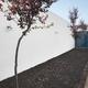 Modern arquitecture indoor minimalist style garden with trees. Horizontal - PhotoDune Item for Sale