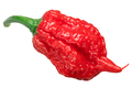 Carolina reaper chile pepper, whole pod, top - PhotoDune Item for Sale