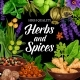 Seasonings, Herbs and Spices Shop - GraphicRiver Item for Sale