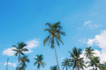 Coconut tree at sky in Thailand - PhotoDune Item for Sale
