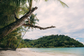 Dries tree on beach with sky - PhotoDune Item for Sale