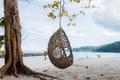 Hammock on tree at the sea - PhotoDune Item for Sale