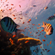 Coral Reef Red Fish - VideoHive Item for Sale