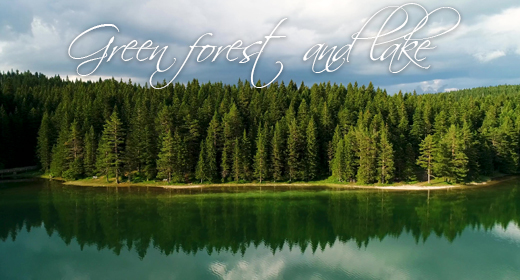Green forest and lake