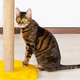 Domestic cat sits near claw sharpener - PhotoDune Item for Sale