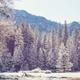 Winter in Yosemite - PhotoDune Item for Sale