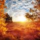 Autumn season - PhotoDune Item for Sale