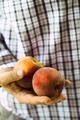 Peaches - PhotoDune Item for Sale