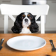 Dog by the table with empty plate - PhotoDune Item for Sale