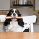 Dog with sausage by the kitchen table - PhotoDune Item for Sale