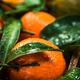 Tangerines or clementines, close up view - PhotoDune Item for Sale