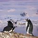 penguins standing on a mountain - PhotoDune Item for Sale