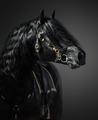 Pura Spanish Horse in portuguese baroque bridle  - PhotoDune Item for Sale
