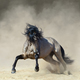 Golden dun Purebred Andalusian horse playing on sand. - PhotoDune Item for Sale