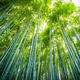 Beautiful landscape of bamboo grove in the forest at Arashiyama - PhotoDune Item for Sale