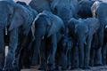 elephant - PhotoDune Item for Sale