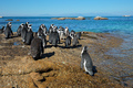 African penguins on coastal rocks - PhotoDune Item for Sale
