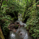 Tropical river between undergrowth in Ubud, Bali - PhotoDune Item for Sale
