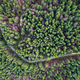 Beautiful road through evergreen pine forest. Aerial drone view - PhotoDune Item for Sale