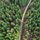 Spectacular aerial drone view of forest road captured from above - PhotoDune Item for Sale