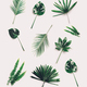 Set of different tropical leaves on white background. - PhotoDune Item for Sale