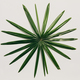 Circular tropical leaf on a light background. - PhotoDune Item for Sale