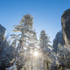 Winter in Yosemite - PhotoDune Item for Sale