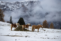 Horses at Seiser Alm, South Tyrol, Italy - PhotoDune Item for Sale
