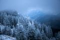 Snowy fir trees - PhotoDune Item for Sale