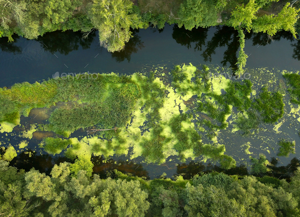 Top view of the river, marshland and trees on the riverbanks - Stock Photo - Images