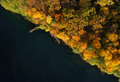 Aerial view of the lake and the bright yellow forest - PhotoDune Item for Sale