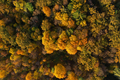 Aerial view of bright autumn forest as background - PhotoDune Item for Sale
