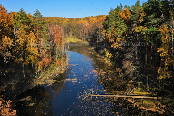Aerial view of the pond and the bright yellow forest is  reflect - Stock Photo - Images