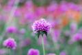 Purple flower in winter - PhotoDune Item for Sale
