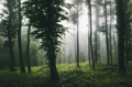 Green dark forest with fog - PhotoDune Item for Sale
