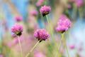 Purple flower at sunlight - PhotoDune Item for Sale