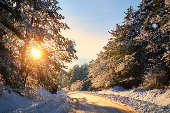 Winter road in forest - Stock Photo - Images