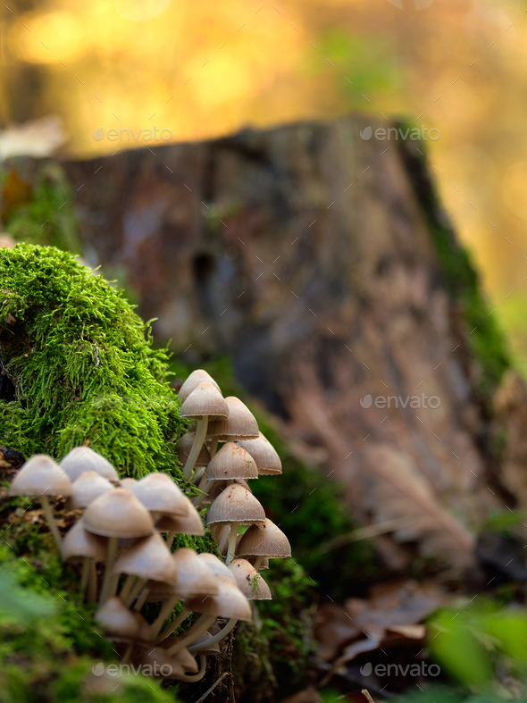 Mushrooms on a trunk - Stock Photo - Images