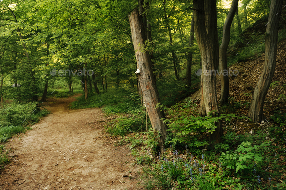 Spring forest road - Stock Photo - Images